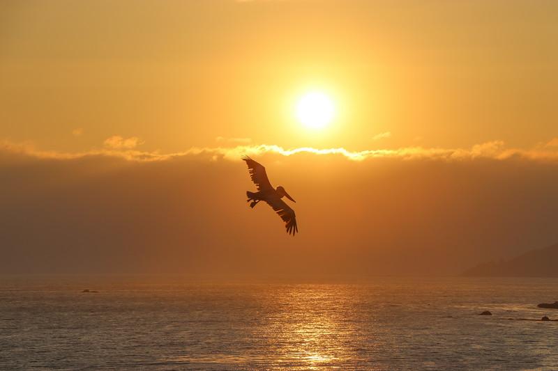 Gliding On The Sun's Light