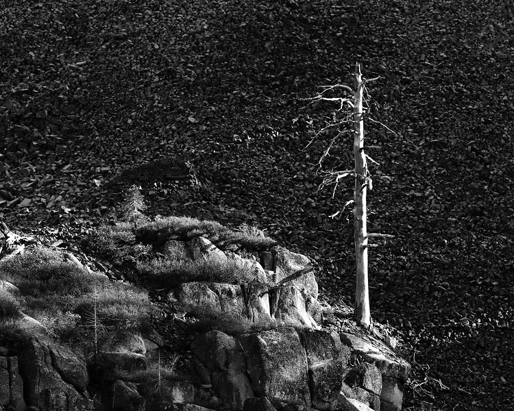 Dead Tree and Shadows, Tuolumne County, CA