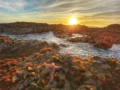Seastar at Sunset Shelter Cove, California