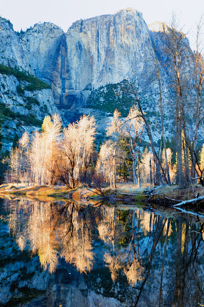 Autumn Trees, Yosemite National Park