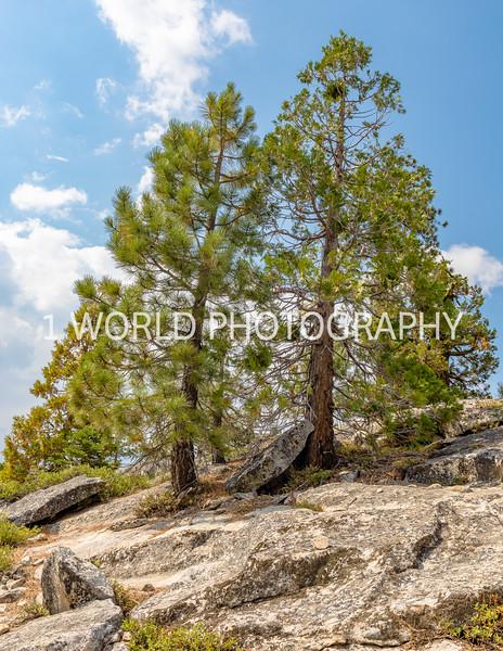 San Fran_Lake Tahoe Trip 2017-1468-81.jpg