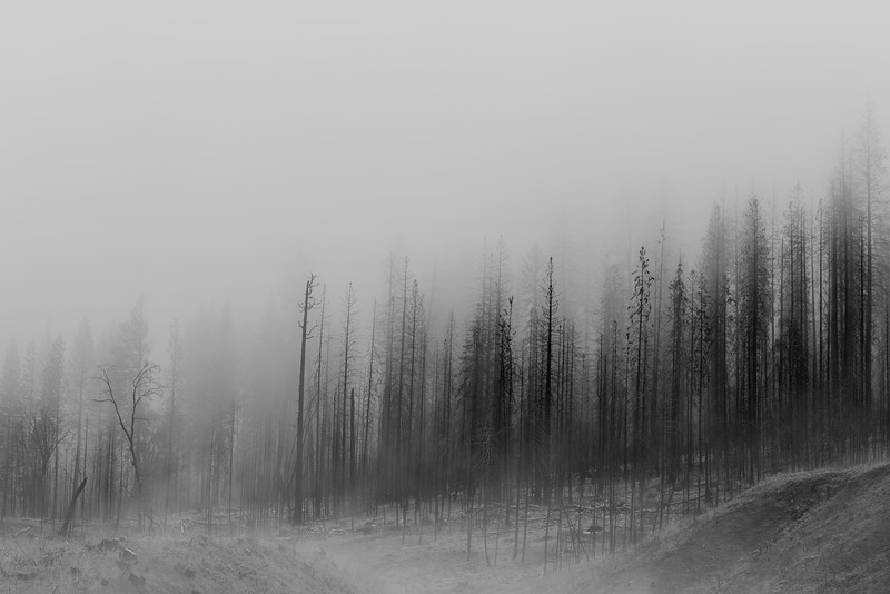 Fog and Snow, Stanislaus National Forest, CA
