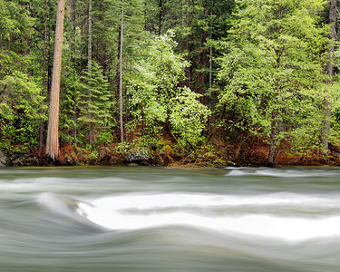 Dogwoods and Merced River, Yosemite National Park