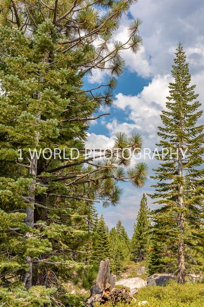 San Fran_Lake Tahoe Trip 2017-1371-78.jpg
