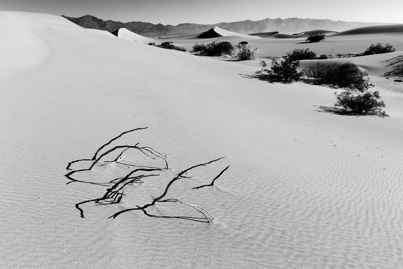 Dead Bush and Dunes, Death Valley National Park