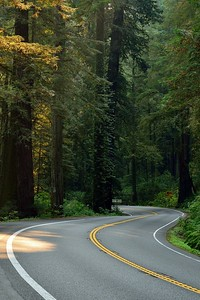 Winding Road of the Redwoods