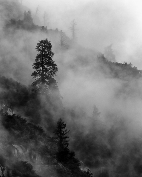Trees and Fog, Camp 4, Yosemite National Park