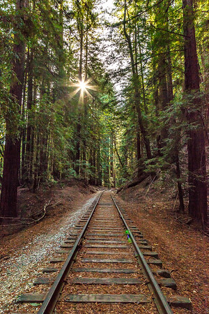 Railroad through the Redwood Forest