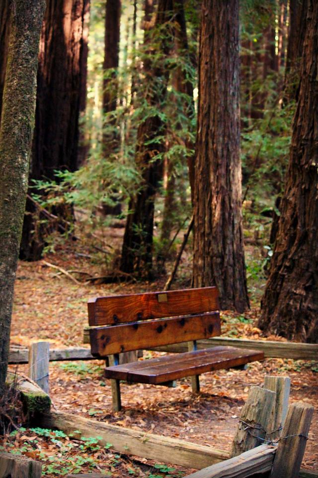 Redwood Respite