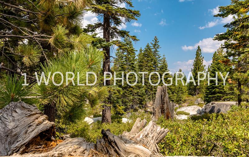San Fran_Lake Tahoe Trip 2017-1303-69.jpg
