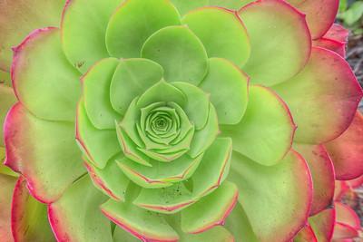 Succulent plant in San Diego, California