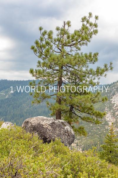 San Fran_Lake Tahoe Trip 2017-1623-98.jpg