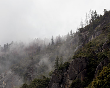 Fog and Trees, Merced River Canyon, Yosemite National Park