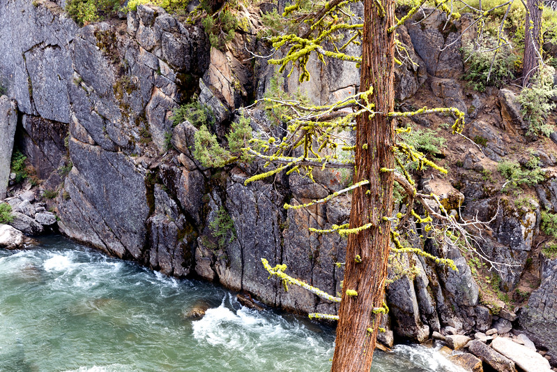 Tree and Stanislaus River, Tuolumne County, CA