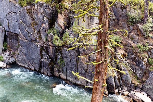 Tree and Stanislaus River, Tuolumne County, CA