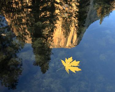 Bigleaf Maple Leaf and El Capitan Reflection, Mariposa County, CA