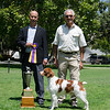 Best of Breed: GCH CH Brigade's Hi Hopes Rocket MH Handler: Michael Frane