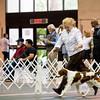 2/R      19 TRU'S KETCHIN A TRACE OF RAIN , SR63947704 7/21/2010. Breeder: Marc & Vicki Rittner. By DC Rusty Ridge Lucky Strike -- CH Tru's Junp N Jada. Kathryn Patrick . Dog.