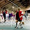 2      28 SHILOH'S RAZZLE N DAZZLIN DÉJÀ VU , SR65427701 12/7/2010. Breeder: Pennie J Peterson. and K Ford By CH Shiloh's Somewhere In Time -- CH Shiloh's Razzle N Dazzlin. Pennie Peterson . Bitch.