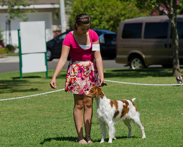 Field Trial Dog Class Hailey and Rocket