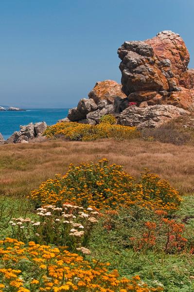Wildflowers at Las Piedras Blancas Lighthouse<br /> San Simeon, California