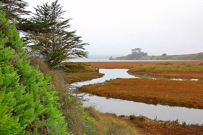 Waterway into Tomales Bay