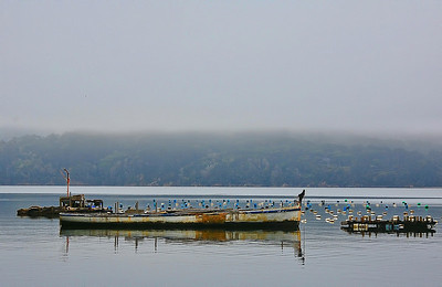 tomales-bay-boat-fog