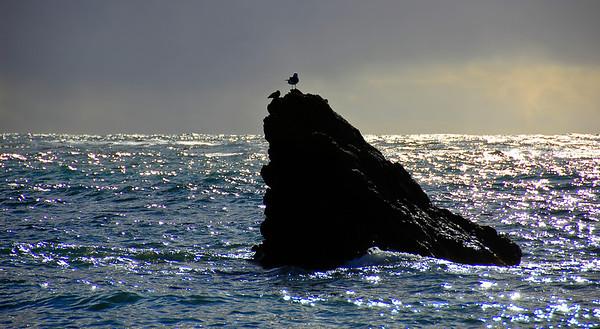 ocean-rock-birds
