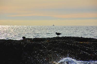 ocean-bird-boat
