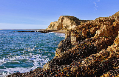 ocean-rocks-mussels