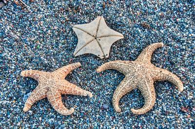 starfish-pebbles
