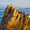 Monterey Gull0362 (Lovers' Point)