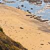 Fitzgerald Marine Preserve, Harbor Seals0576