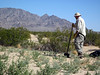 Our job was to pull and dig up invasive weeds on the dunes. Steve Fuller is digging.