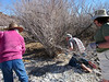 Cal French gets right to work cutting tamarisk