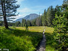 Meadow along the way to Rock Creek with Mount Guyot in the distance.