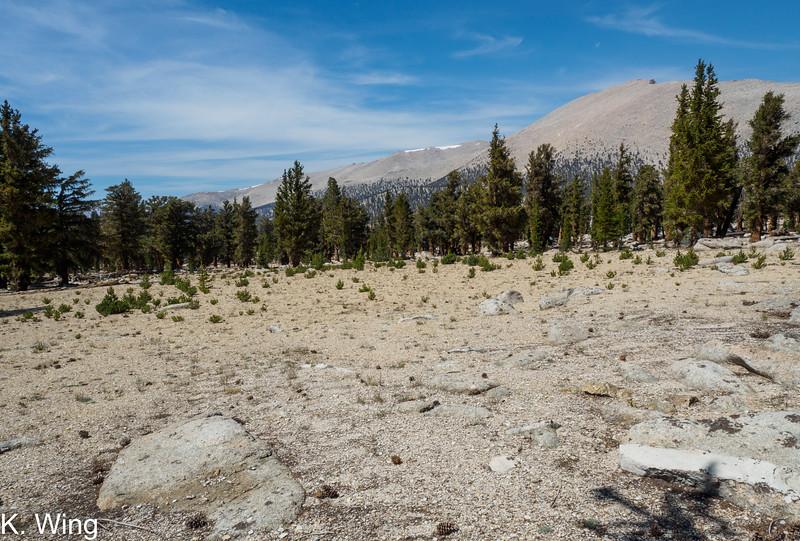 Sandy terrain - Mount Chamberlin and Joe Devel Peak.  It should be called Joe Devil Peak because it is a tough sandy slog to get to the top.