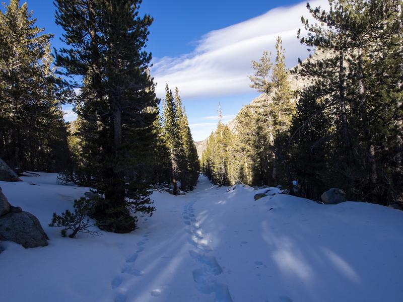 My snowshoe tracks next to animal tracks.