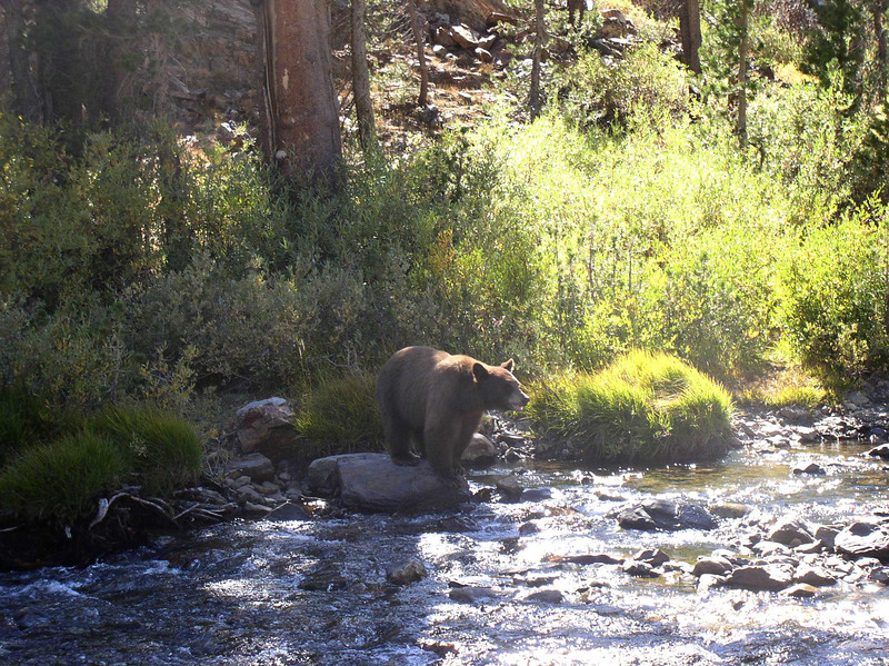 A bear near where we camped - Photo by Alan Erickson