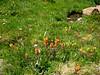Abundant wildflowers blooming in the valley.