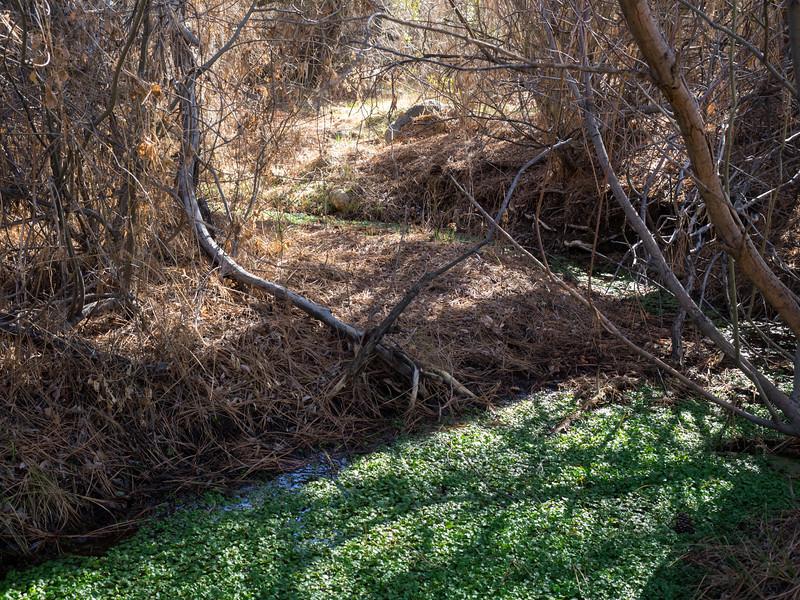 Jacks Creek