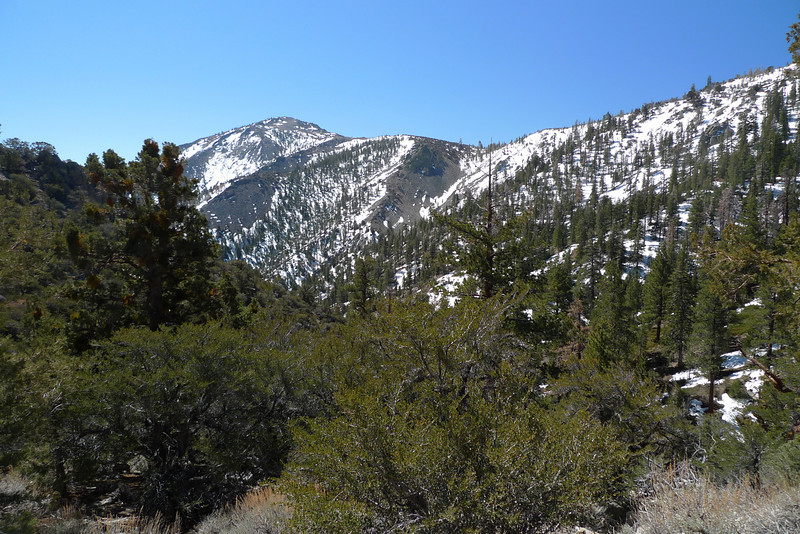 A view of Round Mountain and the ridge I'll follow to it from along the trail between the saddle at 8600' and Olancha Pass.