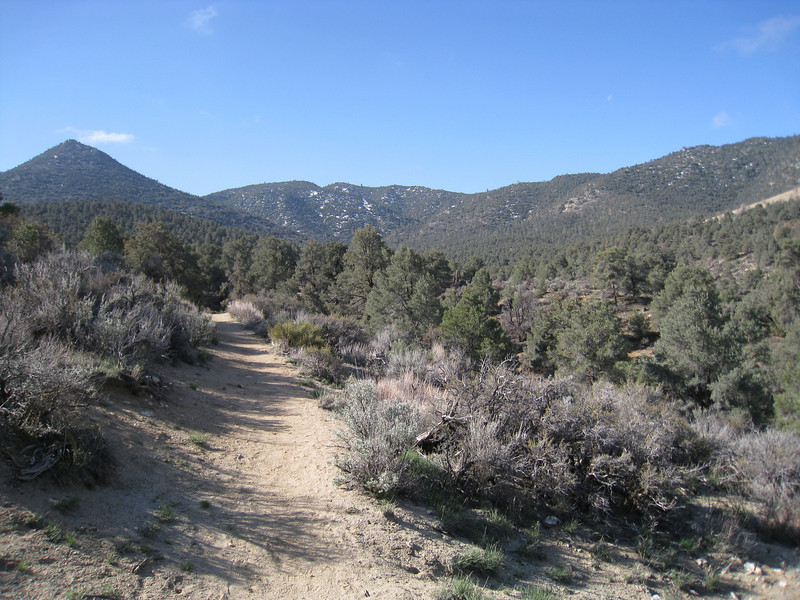 Along the PCT near the Walker Pass Campground.