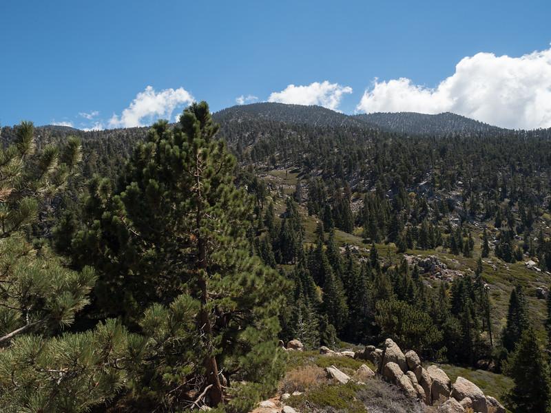 View up toward Limber Pine from Gerhardt Peak