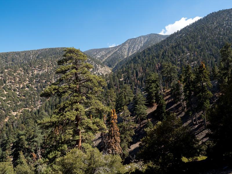 View up Forsee Creek toward the San Bernardino Ridge