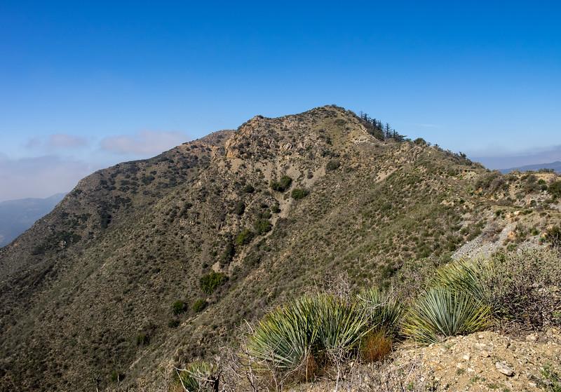 Mendenhall Peak