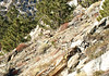 A big horn sheep along the ridge.