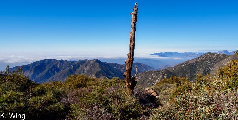 Above the clouds on Sugarloaf Peak