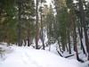 Near Vivian Creek Camp