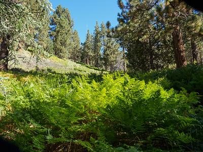 Wildhorse Trail to Sugarloaf Mountain 9-8-18